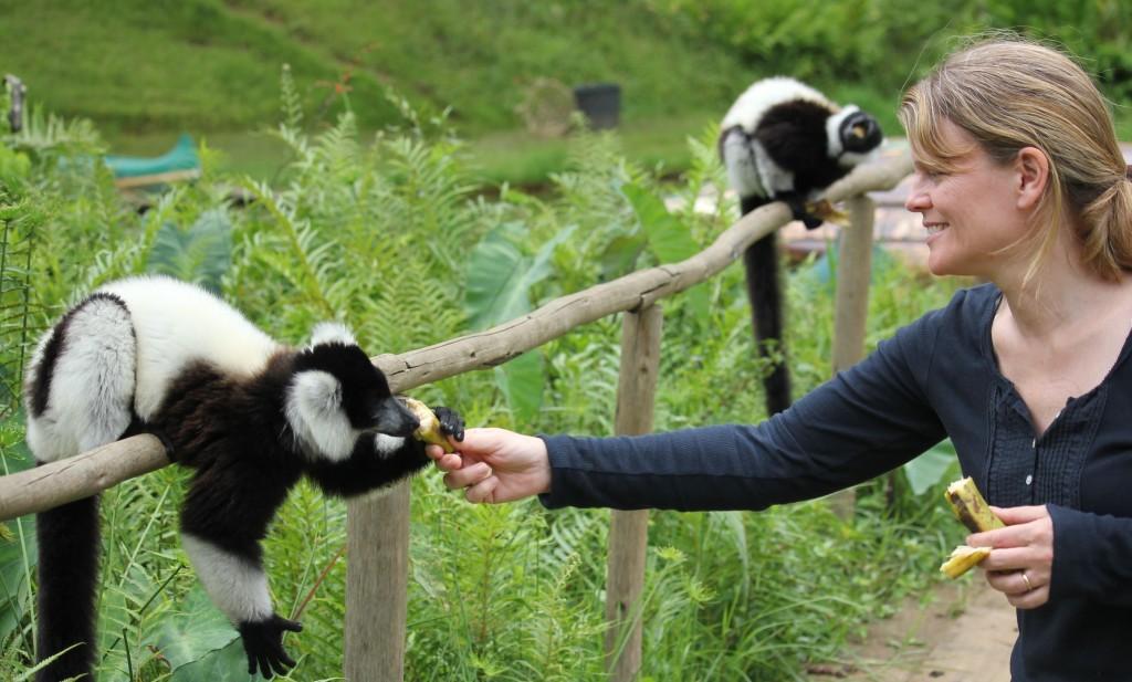 This image has an empty alt attribute; its file name is feeding-lemur-2-1.jpg